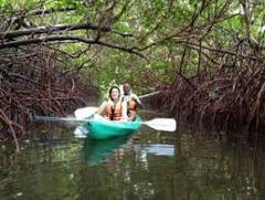 Kayak Tamarindo estuary