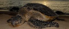 Turtle Nesting Tour