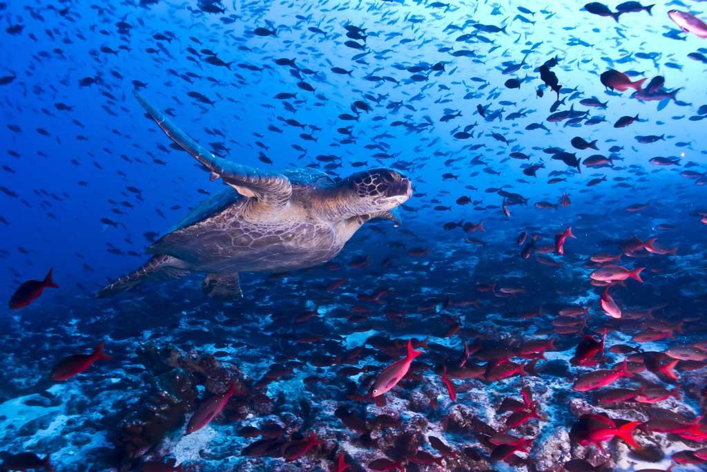 Cahuita snorkelling and rainforest