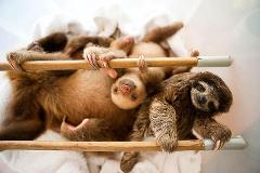 Sloth Santuary