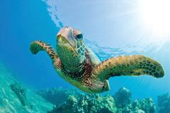 Hawaii Nautical - Turtles Guaranteed Mid-Day Snorkel Sail with Lunch (Waikiki) - Kewalo Basin Harbor