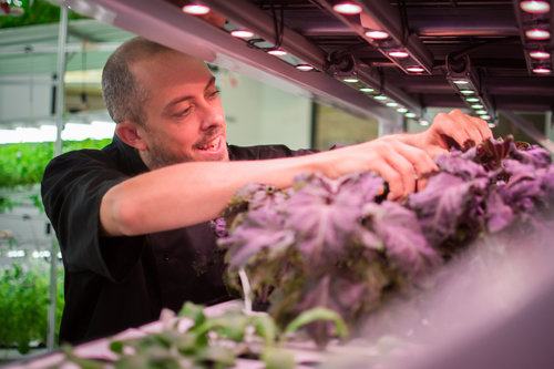 Hydroponics & Indoor Farming