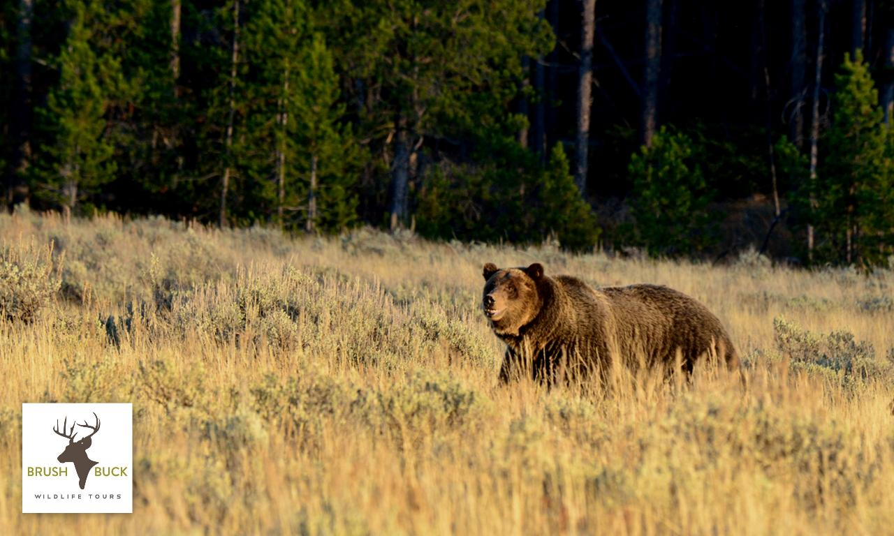 Grand Teton / Yellowstone 4 Day / 3 Night Wildlife Adventure