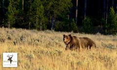 Grand Teton / Yellowstone 4 Day / 3 Night Wildlife Adventure