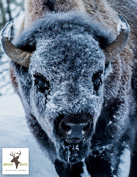 4 Day / 3 Night Grand Teton & Yellowstone Winter Adventure