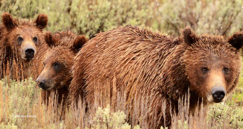 Alaska: Ocean Wildlife to Interior Wilderness Adventure