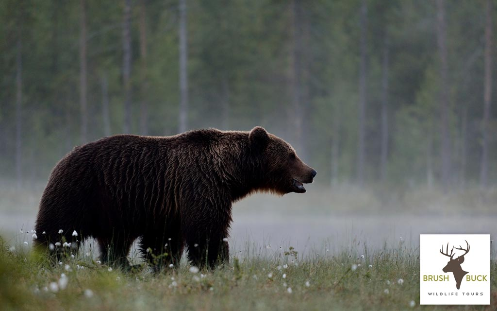 Yellowstone Wildlife and Scenic Tour - PRIVATE