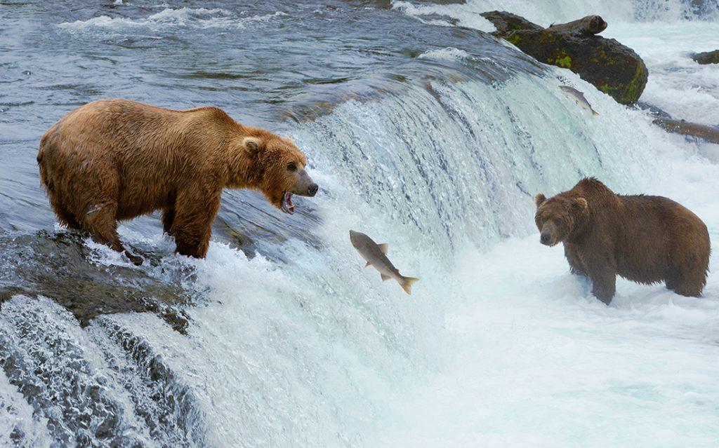 Alaska Coastal Brown Bears to Denali 7 Day Adventure