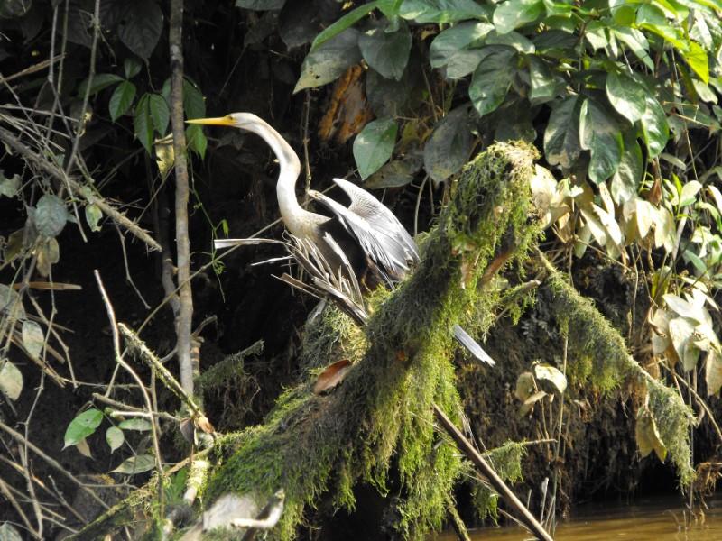 Cuyabeno Amazon Eco-Lodge Adventure 6D/5N