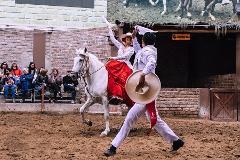 Peruvian Paso Horse Exhibition