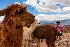 Sacred Valley: Llama Trek