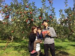【Hirata Kankou-nouen】Hiroshima Apple Picking at the Fruits Amusement Park, only for Autumn!  / 秋限定!広島・果物パークで多種類のリンゴ狩り体験