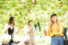 【Hirata Kankou-nouen】Hiroshima Fruits Picking at the Fruits Amusement Park, enjoying Seasonal Fruits all at once!  /数種類の季節フルーツが一度に楽しめる!広島・果物パークでフルーツ狩り体験