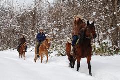 札幌で初めての雪中乗馬体験(60分)