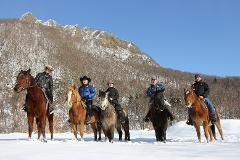 札幌で初めての雪中乗馬体験(40分)