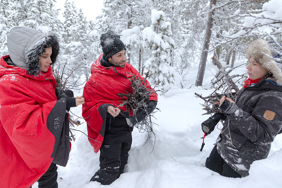 Become a Sami survivor