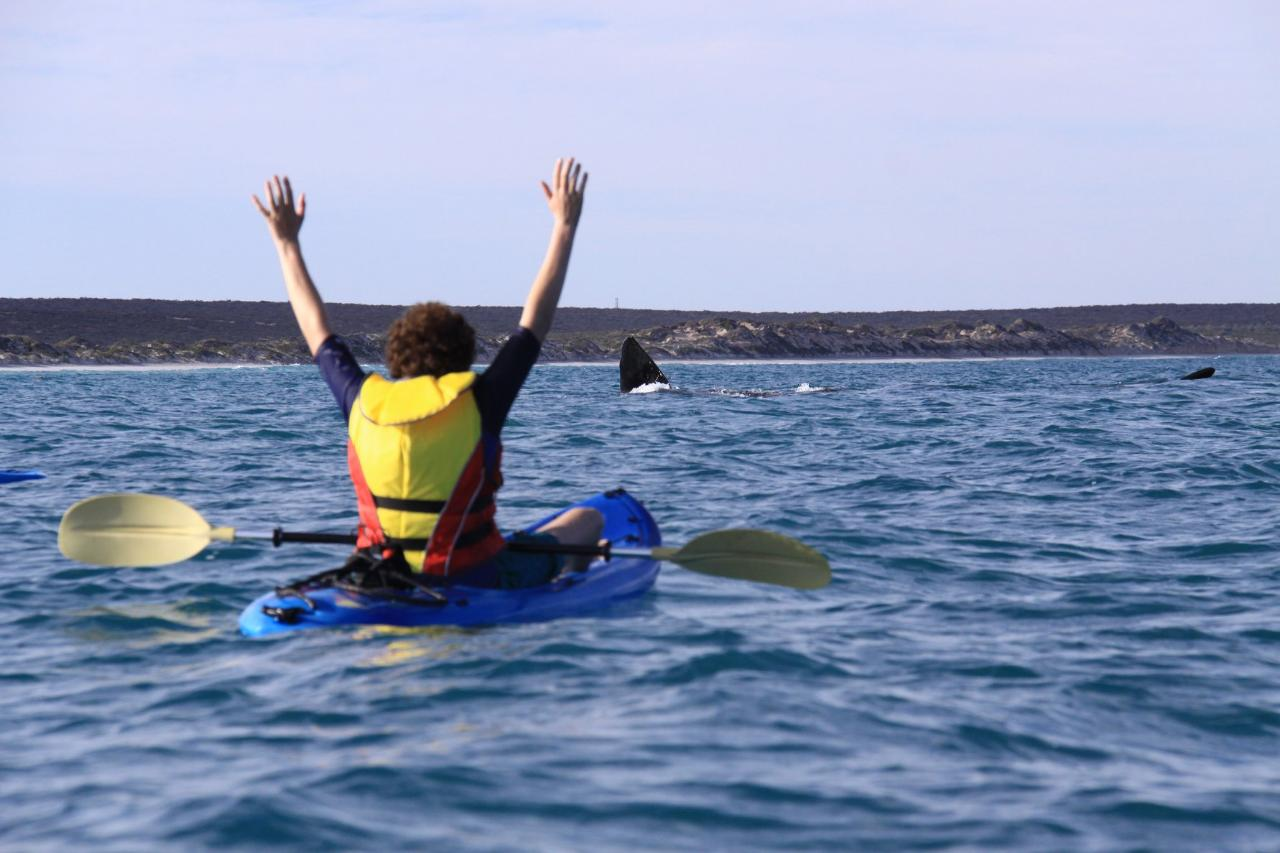 Guided Whale Kayaking