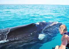 Whale and Oceanic Cruise