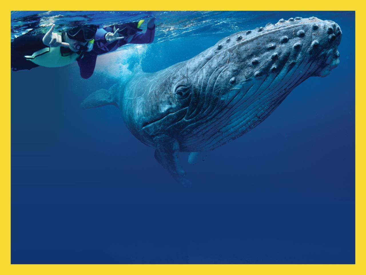 Whale Swim & Watch
