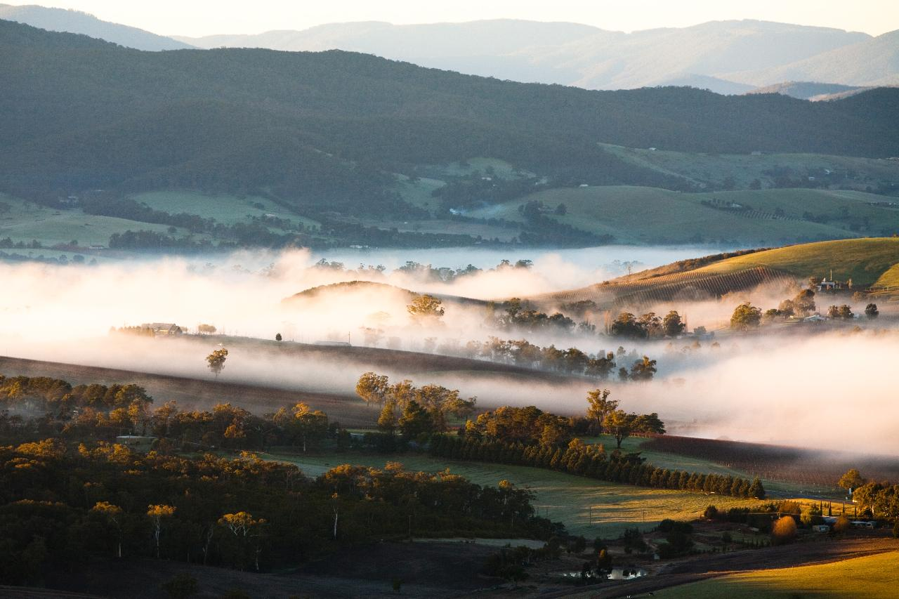 Yarra Valley Adventure - Rainforest Hike and Winery Tour