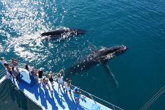 Whale Watching Sunset Cruise