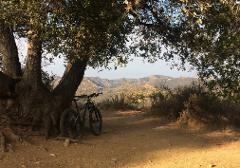 WILL ROGERS/SULLIVAN/YEFVARTS/CHENEY/BACKBONE (Santa Monica) Electric MTB - Freeride/Downhill Premium RIDE 240 min - (ADVANCED)