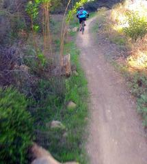 Sullivan Canyon (Pacific Palisades)Electric MTB - Freeride/Downhill 90 min - (BEGINNER)