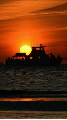 Sunset Cruise & Dolphin Search