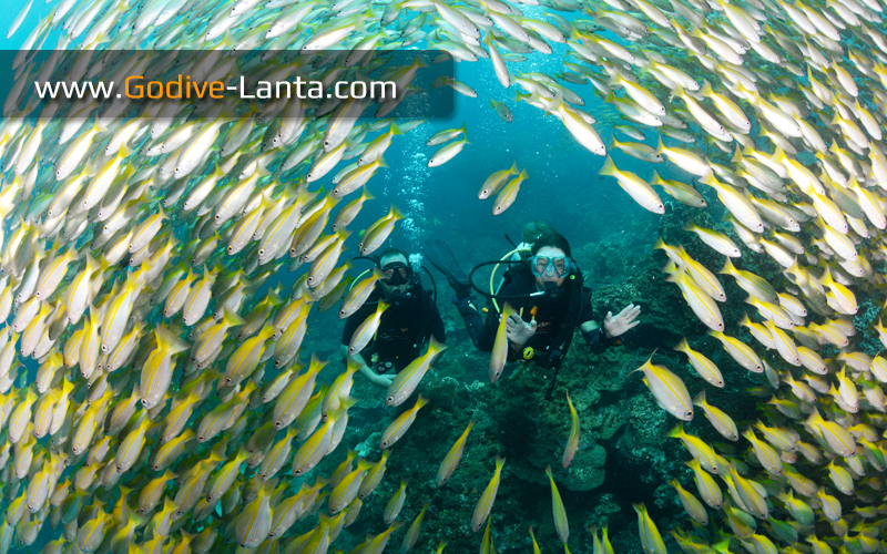 [ Online ] Package Diving - 5 Days 10 Dives