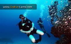 PADI Drift Diver Course 2 Dives