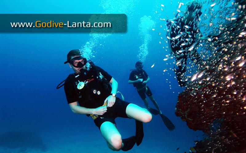 [ Online ] PADI Drift Diver Course 2 Dives