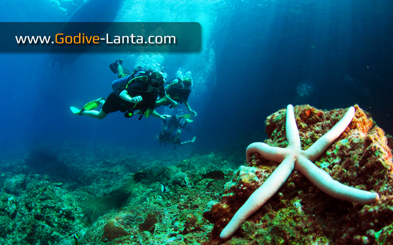 [ Online ] PADI Open Water Diver Course + PADI Advanced Diver Course 9 Dives