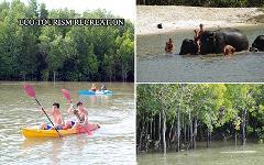 Excursion Trip (Half Day) : Swim with Elephant - Mangrove