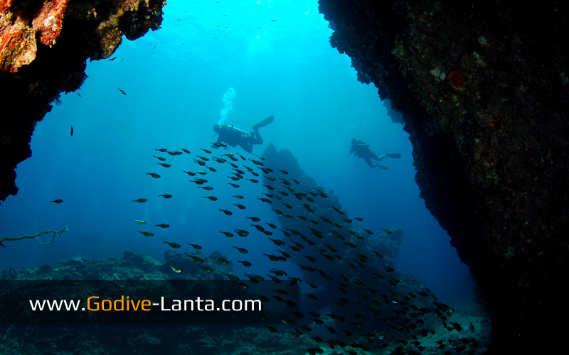 [ Online ] PADI Advanced Open Water Diver Course 5 Dives