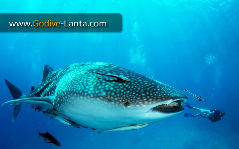 [ Online ] PADI Adventure Diver Course 3 Dives