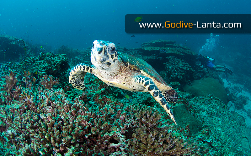 [ Online ] PADI AWARE - Coral Reef Conservation Course (No Dive)