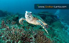 PADI AWARE - Coral Reef Conservation Course (No Dive)