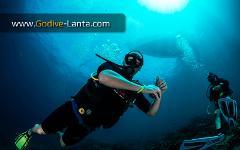 PADI Boat Diver Course 2 Dives