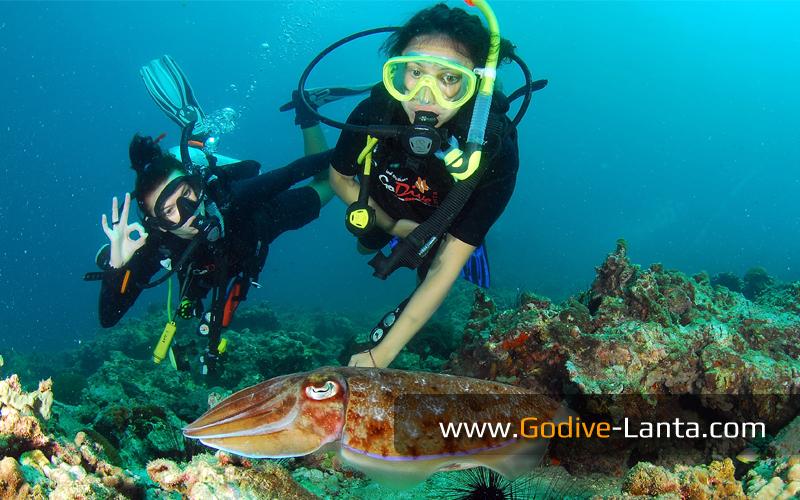 [ Online ] Discover Scuba Diving / Basic Diver Course