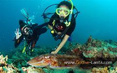 Discover Scuba Diving / Basic Diver Course