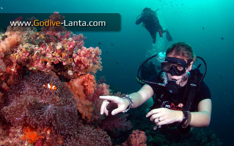 [ Online ] PADI Divemaster Course