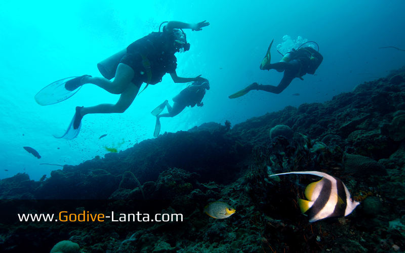 [ Online ] PADI Multilevel Diver Course 2 Dives