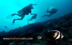 PADI Multilevel Diver Course 2 Dives