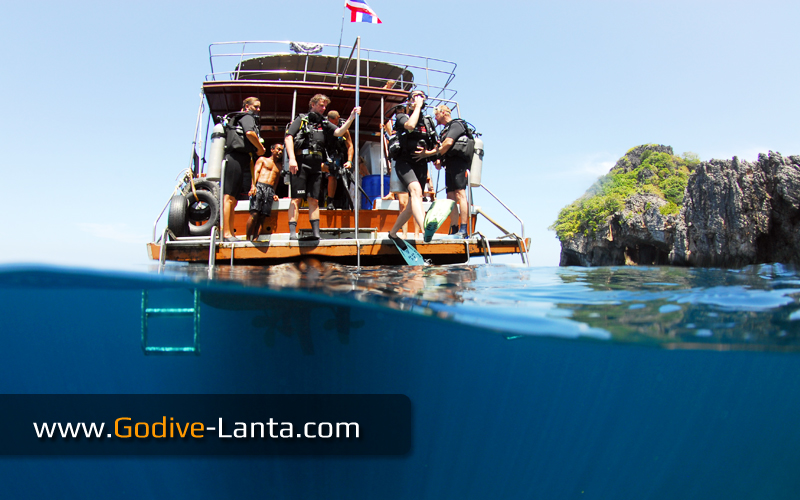 [ Online ] PADI Open Water Diver Course