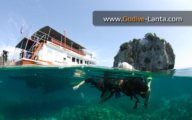 [ Online ] PADI Scuba Diver Course
