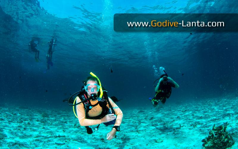 [ Online ] PADI Open Water to Divemaster