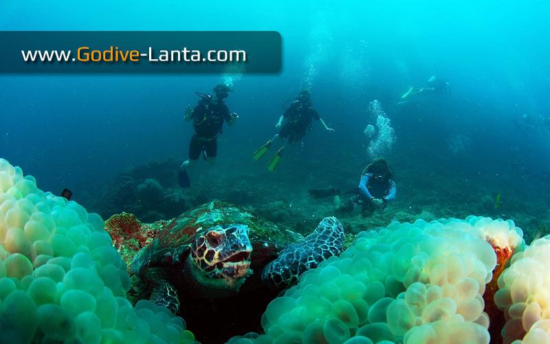 [ Online ] SSI Dive Control Specialist Course (DCS)