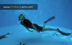 SSI Freediving Basic Course