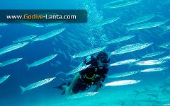 SSI Scuba Diver upgrade to SSI Open Water Diver 2 Dives