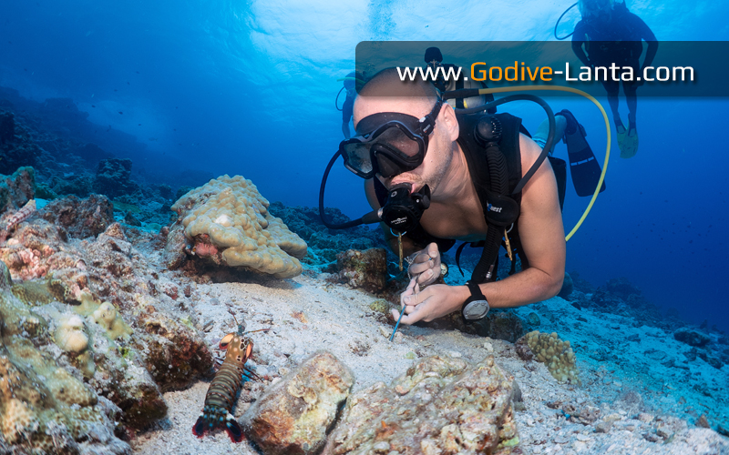 [ Online ] SSI Open Water Diver to Divemaster